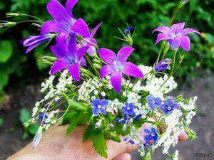 Jaké lesní květiny rostou dobře na našich květinových záhledech