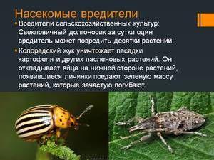 Hmyz na světě