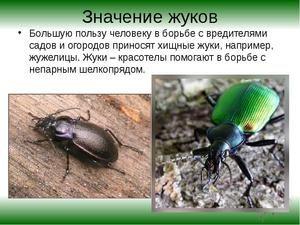 Užitečný hmyz