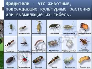Výhody a poškození hmyzu