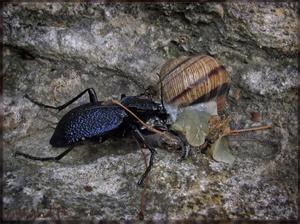 Jak se vypořádat s hmyzem