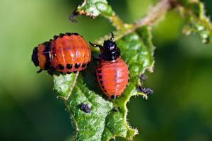 Boj proti hmyzu