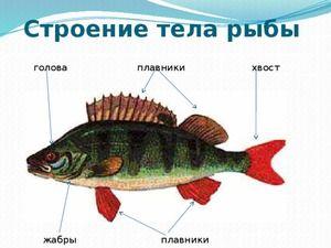 Vnější struktura ryb