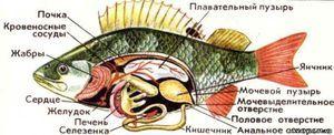 Vnitřní struktura těla