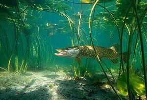 Řeka šťáva
