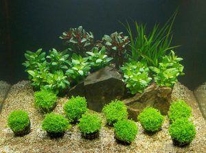 Která půda pro akvárium a rostliny je lepší - druh a správná volba