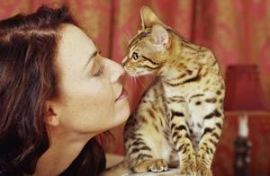 Ukazatele nezdravé kočky