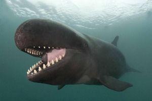 Ozubené velryby