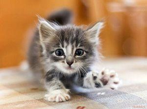 Krmení malé kotě