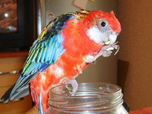 Jak se starat o papouška