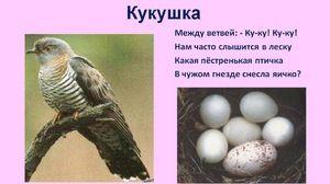 Kukačka migrující pták