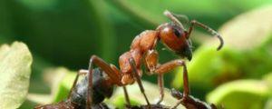 Mravenci jsou vysoce organizovaní a velmi zajímavý hmyz pro pozorování