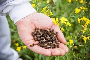 Vlastnosti a vlastnosti včel