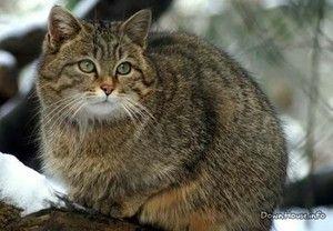 Životní styl divoké kočky