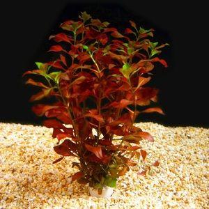 Jak udržet rostliny v akváriu