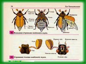 Struktura těla květnatého chrobáka