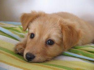 Chlapec nebo dívka je způsob, jak určit, které pohlaví je štěně