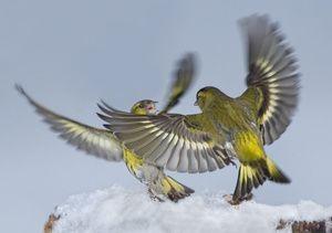 Krása přírody-Bird-čizh