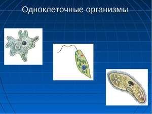 Jak se rozkládají jednoduché organismy?