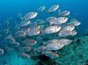 Druhy mořských ryb: popis a vlastnosti