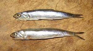 Hamsa - malé ryby