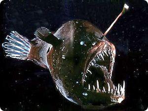 `Sea Devil`: rybářský cyklus lovu hlubinných ryb