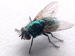 Mouchy žijí vedle nás, ale každý může říct, kolik nohou mají