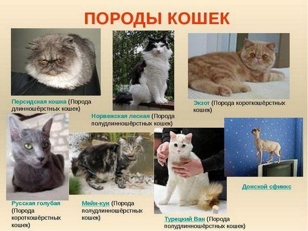 Které kočky jsou lepší