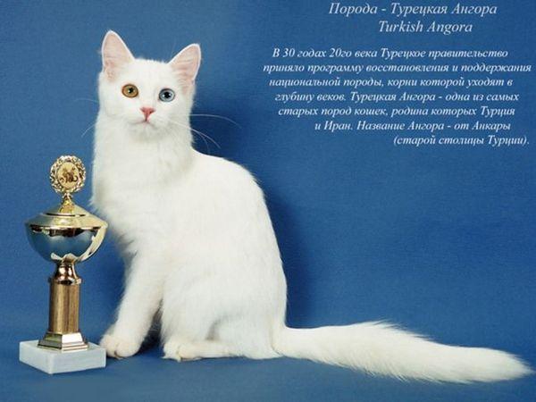 Obsah koček