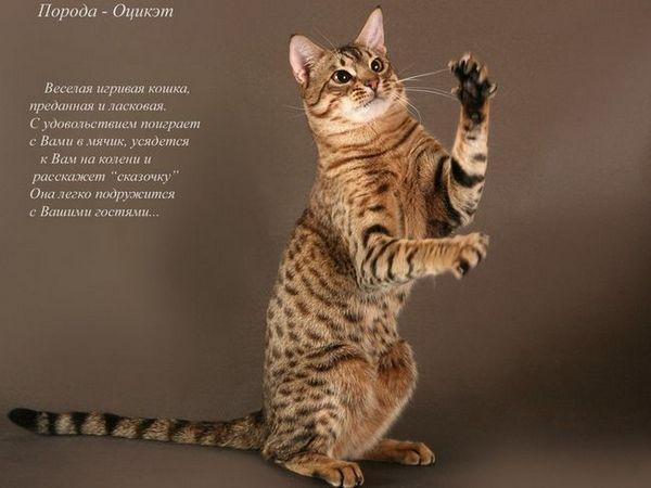 Externí údaje o kočkách