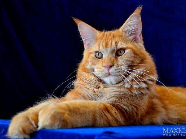 Údaje o kočkách