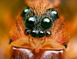 Spiderovy oči