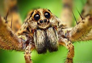 Spiderovy zrakové orgány