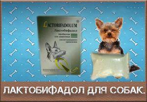 Vlastnosti použití laktobiofadolu pro psy