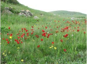 Vlastnosti všech druhů rostlin v stepí