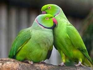 Náhrdelník papoušky