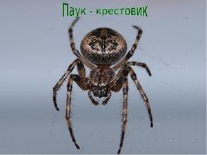 Popis pavouka pavouka