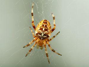 Jak tkané pavučiny