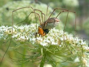 Krmení pavouka