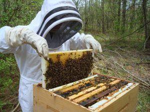 Пчеловодство для начинающих: советы и рекомендации