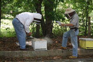 Как обучится правилам пчеловодства