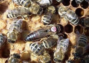 Druhy včel