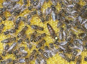 Jak včel