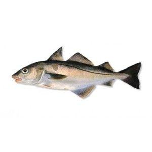 Vzhled tuňáka ryby