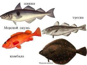 Popis ryby