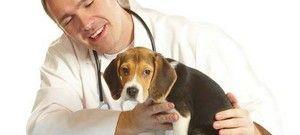 Výhody a nevýhody kastrace psů
