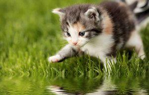 Důvody, proč se kočka bojí vody