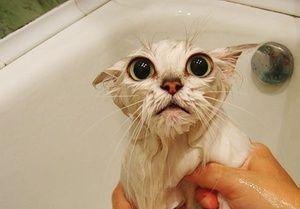 Jak naučit kočku plavat