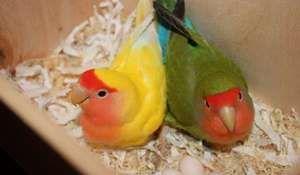 Spodní část klece pro papoušky