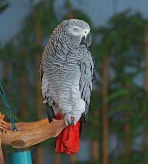 Popis exteriéru papouška je horký